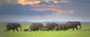 Silent Journey - Serengeti National Park, Tanzania