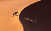 Follow My Lead - Namib Desert, Namibia