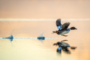 Glide in your Stride - Great Salt Lake